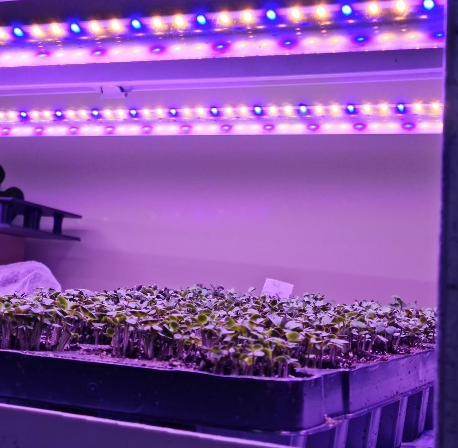 That's one of the main advantages of utilising vertical farming