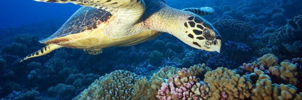 فيديو - اليوم العالمي للسلاحف البحرية (16 يونيو): أهمية إنقاذ هذه المخلوقات الرائعة